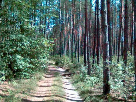 Биринский лес. FOTO ALI ESKANDAR KULABI