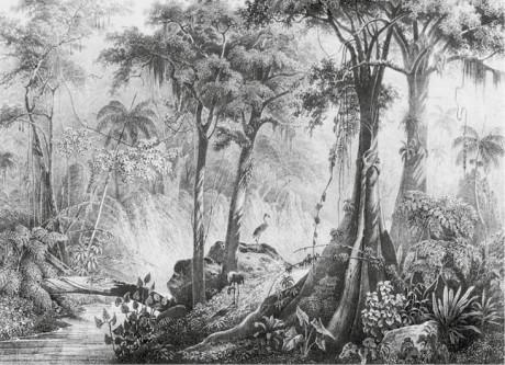 Brazilský prales