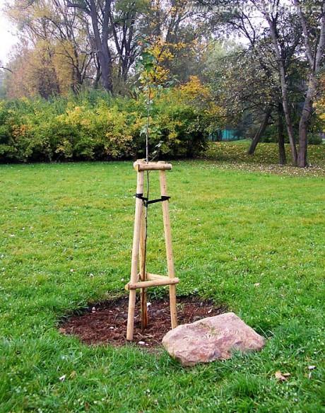 Tohle je strom Bolkova dvorního výtvarníka Dušana Ždímala, co už také není. FOTO archiv