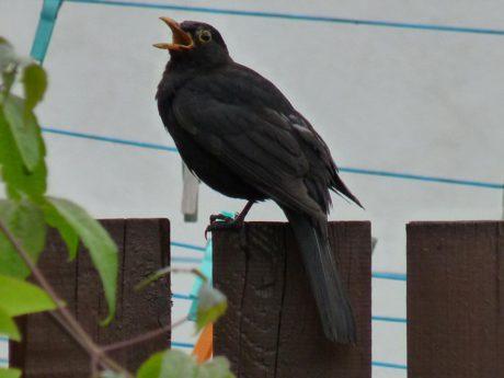 A z plotu si stěžuje píp…pááá ůůůíp… FOTO archiv