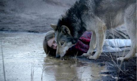 Divoká.  Podivuhodné pouto s vlkem promění nenápadnou dívku ve vášnivou šelmu Foto Heimatfilm